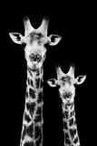 Safari Profile Collection - Portrait of Giraffe and Baby Black Edition IV Impressão fotográfica por Philippe Hugonnard
