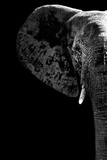 Safari Profile Collection - Elephant Black Edition III Photographic Print by Philippe Hugonnard