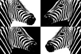 Safari Profile Collection - Zebras III Photographic Print by Philippe Hugonnard