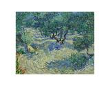 Le champ d'oliviers, 1889 Affiches par Vincent van Gogh