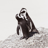 Awesome South Africa Collection Square - Penguin Lovers IV Photographic Print by Philippe Hugonnard