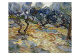 Olive Trees, 1889 Prints by Vincent van Gogh