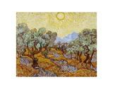 Olivenbäume, 1889 Poster von Vincent van Gogh