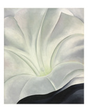 Morning Glory with Black, 1926 Kunst von Georgia O'Keeffe