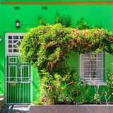 Awesome South Africa Collection Square - Green House - Cape Town Photographic Print by Philippe Hugonnard