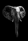 Safari Profile Collection - Elephant Black Edition Photographic Print by Philippe Hugonnard