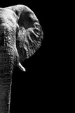 Safari Profile Collection - Elephant Black Edition IV Photographic Print by Philippe Hugonnard