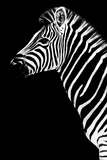 Safari Profile Collection - Zebra Black Edition III Photographic Print by Philippe Hugonnard