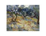 Olive Trees, 1889 Posters af Vincent van Gogh