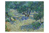 Olive Orchard, 1889 Print by Vincent van Gogh