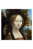 Ginevra de' Benci, c. 1474-1478 Art by Leonardo Da Vinci