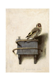 The Goldfinch, 1654 Poster af Carel Fabritius