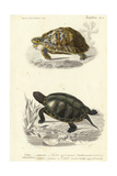 Antique Turtle Duo II Poster van  Oudart