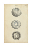 Cylindrical Shells I Art by  Wood