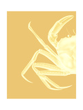 Contrasting Crab in Mustard a Prints by Fab Funky
