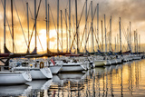 Backlit Marina Photographic Print by Danny Head