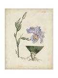 Lavender Curtis Botanicals IV Prints by  Curtis