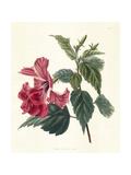 Rose Hibiscus II Posters