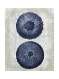 Indigo Blue Sea Urchins b Prints by Fab Funky