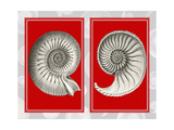 Nautilus Shells On Red Prints by Fab Funky