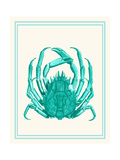 Mixed Nautical Turquoise on Cream b Prints by Fab Funky