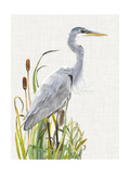 Waterbirds & Cattails I Posters by Naomi McCavitt