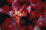 Red Star - Nusa Kode, Indonesia Photographic Print by Beverly Factor