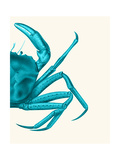 Contrasting Crab in Turquoise a Prints by Fab Funky