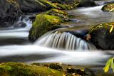 Close to Nature Lámina fotográfica por Danny Head