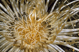 Pure Dazzle - N. Sulawesi, Indonesia Photographic Print by Beverly Factor