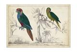 Parrot Pair I Stampe