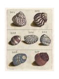 Shell Collection II Posters