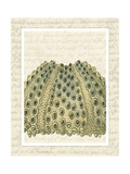 Blue Corals On VIntage Script d Print by Fab Funky