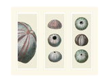 Sea Urchins on 3 Panels Poster by Fab Funky