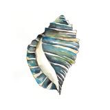 Aquarelle Shells I Poster by Chariklia Zarris