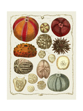 Starfish and Sea Urchins b Posters by Fab Funky