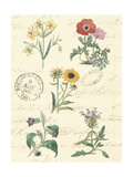 Botanical Journal IV Posters by  Vision Studio