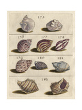Shell Collection VI Posters