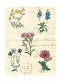 Botanical Journal III Prints by  Vision Studio