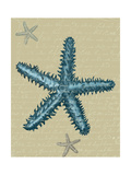 Blue Starfish on Taupe b Posters by Fab Funky