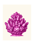 Haeckel Hexacoralla Coral Pink Posters by Fab Funky