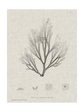 Charcoal & Linen Seaweed III Art by Henry Bradbury