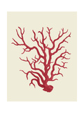 Corals Coral On Cream a Print by Fab Funky