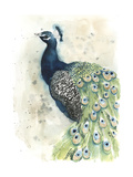Watercolor Peacock Portrait II Prints by Grace Popp