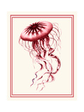 Mixed Nautical Coral on Cream e Posters by Fab Funky