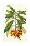Tropical Rhododendron I Posters by Horto Van Houtteano