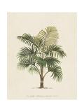 Les Palmiers IV Prints