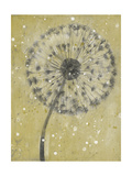 Dandelion Abstract I Posters by Tim OToole