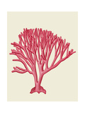 Red Corals 1 c Prints by Fab Funky