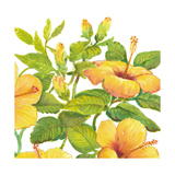 Watercolor Hibiscus II Print by Tim OToole